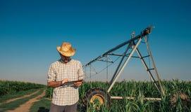 Granjero que usa la tableta en campo de maíz con el sistema de irrigación imagenes de archivo