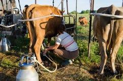 Granjero que usa nuevas tecnologías en vacas de ordeño Imagen de archivo libre de regalías