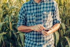 Granjero que usa smartphone en campo de maíz imagen de archivo libre de regalías