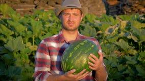 Granjero sonriente Holding Organic Watermelon del hombre en campo de la agricultura almacen de video