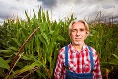 Granjero Standing Next To un campo de maíz Foto de archivo