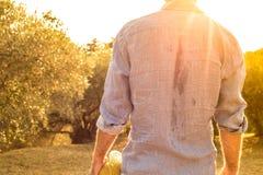 Granjero sudoroso que se coloca delante de una arboleda verde oliva - agricultura Fotos de archivo
