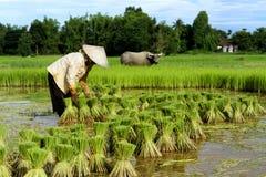 Granjero tailandés con el búfalo Imágenes de archivo libres de regalías