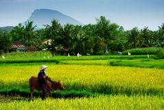 Granjero vietnamita