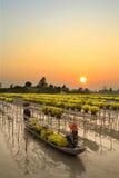 Granjero vietnamita que cosecha la flor en la puesta del sol Foto de archivo libre de regalías