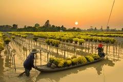 Granjero vietnamita que cosecha la flor en la puesta del sol Foto de archivo