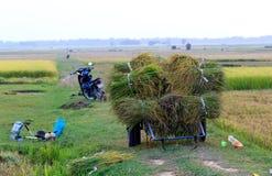 Granjero vietnamita que trabaja en los campos del arroz fotografía de archivo libre de regalías