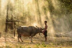 Granjero y búfalo Fotografía de archivo libre de regalías
