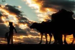 Granjero y búfalo con las siluetas Imagen de archivo libre de regalías