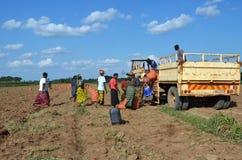 Granjeros africanos Foto de archivo libre de regalías
