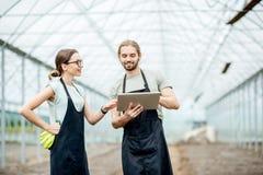 Granjeros con la tableta en el invernadero imagen de archivo libre de regalías