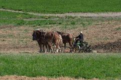 Granjeros de Amish que labran la tierra Foto de archivo libre de regalías