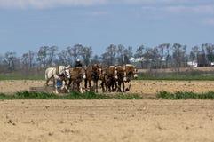 Granjeros de Amish que labran la tierra Fotografía de archivo libre de regalías
