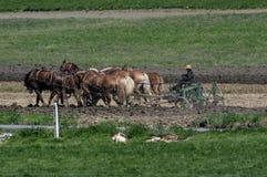 Granjeros de Amish que labran la tierra Imagen de archivo libre de regalías