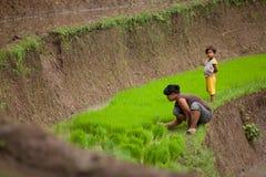 Granjeros del arroz Foto de archivo libre de regalías