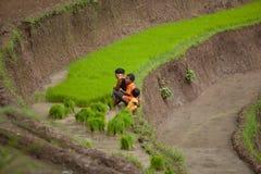 Granjeros del arroz Imagen de archivo libre de regalías