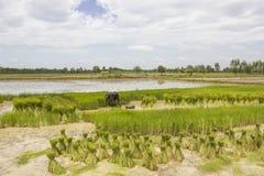 Granjeros del arroz de la estación Foto de archivo