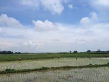Granjeros del arroz en Madura, Indonesia Imagen de archivo libre de regalías