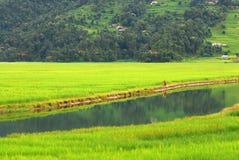 Granjeros en la reflexión del agua del lago del fewa, Nepal Fotos de archivo libres de regalías