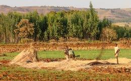 Granjeros etíopes Foto de archivo