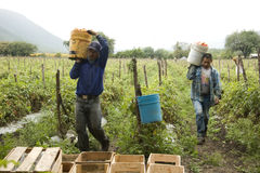 Granjeros mexicanos Imagen de archivo libre de regalías