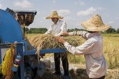 Granjeros que cosechan el arroz fotografía de archivo libre de regalías
