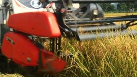 Granjeros que cosechan el arroz en los campos por la máquina metrajes