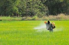 2 granjeros que rocían el insecticida en el campo del arroz Fotografía de archivo libre de regalías