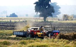 Granjeros y esposas que cosechan la cosecha del arroz Fotografía de archivo libre de regalías