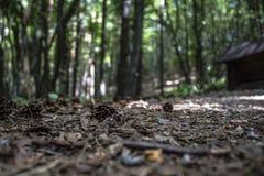 Grankotte i skogen Arkivbilder