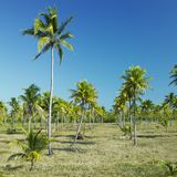 Granma National Park, Cuba Stock Images