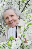 Granny on background of white flowers Stock Photography