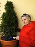 Granny grows bush Stock Images
