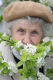 Granny smells  white flowers Stock Image