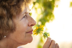 Granny smells a yellow flower Stock Image