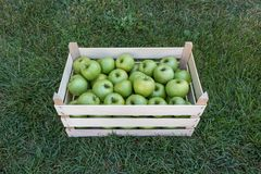 Granny Smith green apples in a wooden farmers market crate, Serbia stock photo