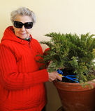 Granny with sunglasses grows plant Royalty Free Stock Images