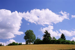 Grano, árboles y nubes Fotos de archivo