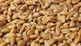 grano stock footage