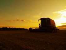 Grano abbandonato del raccolto dell'associazione in mezzo ad un campo dell'azienda agricola Giacimento di grano giallo di mattina Immagini Stock