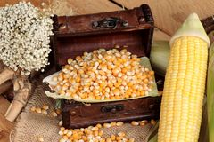 Grano amarillo del maíz y maíz secos frescos Imagen de archivo