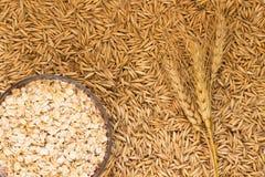 Grano; Avena del grano e di messa a terra del ramoscello Immagine Stock
