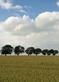 Grano-campo con los árboles en la línea 2 Fotos de archivo libres de regalías