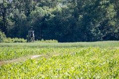 Grano & cereale i ciechi di caccia Fotografia Stock Libera da Diritti