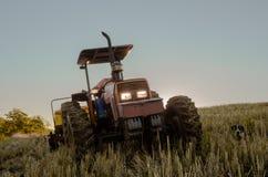 Grano che pianta, agricoltura, uomo del campo fotografie stock