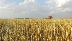 Grano che raccoglie le tagliatrici Il grano sta raccogliendo l'agricoltura Raccolta del moto video del colpo dello steadicam del  Immagini Stock Libere da Diritti