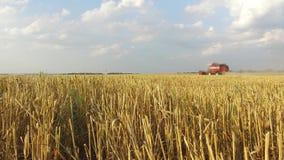 Grano che raccoglie le tagliatrici Il grano sta raccogliendo l'agricoltura Raccolta del moto video del colpo dello steadicam del  Fotografia Stock