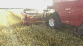 Grano che raccoglie le tagliatrici Il grano sta raccogliendo l'agricoltura Raccolta del video di moto del colpo dello steadicam Fotografia Stock