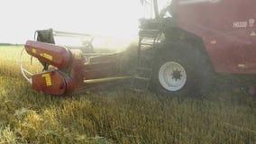 Grano che raccoglie le tagliatrici Il grano sta raccogliendo l'agricoltura Raccolta del video di moto del colpo dello steadicam Immagine Stock