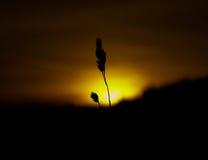 Grano con un tramonto Immagini Stock Libere da Diritti